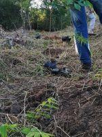 Bepflanzung_Naturwald